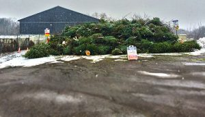 Pile of Christmas trees at South Burlington Drop-Off Center