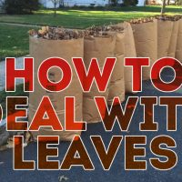 "bags of leaves with text ""how to deal with leaves"""