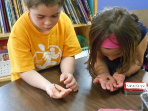 Two students holding worms at a table in Mrs. Seaman's kindergartners at Hiawatha Elementary School in Essex Junction.