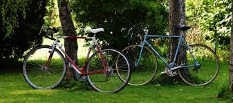 Two bicycles leaning against trees.