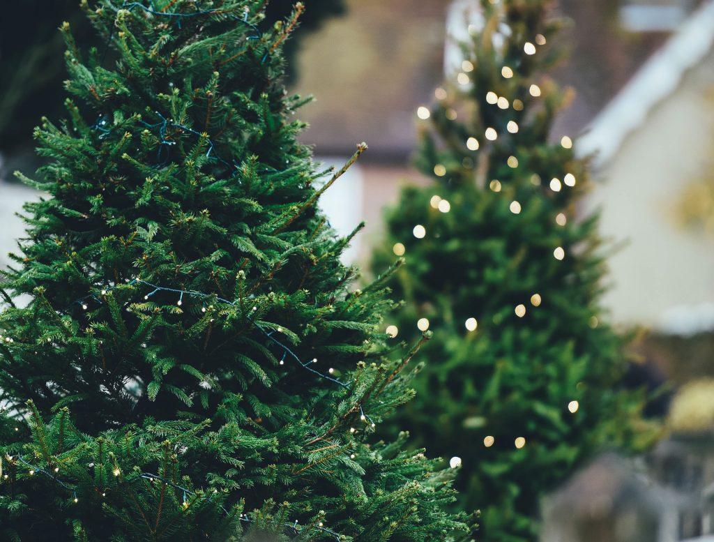Natural Christmas tree close up